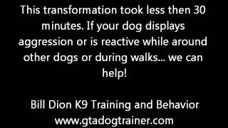 Aggressive / Reactive Dog Rehabilitation