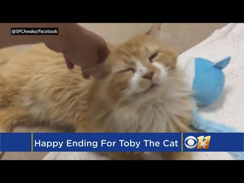 Cat Saved After Walking 12 Miles To Family Who Rejected Him