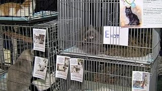 Как в Йошкар-Оле решают проблемы бездомных животных