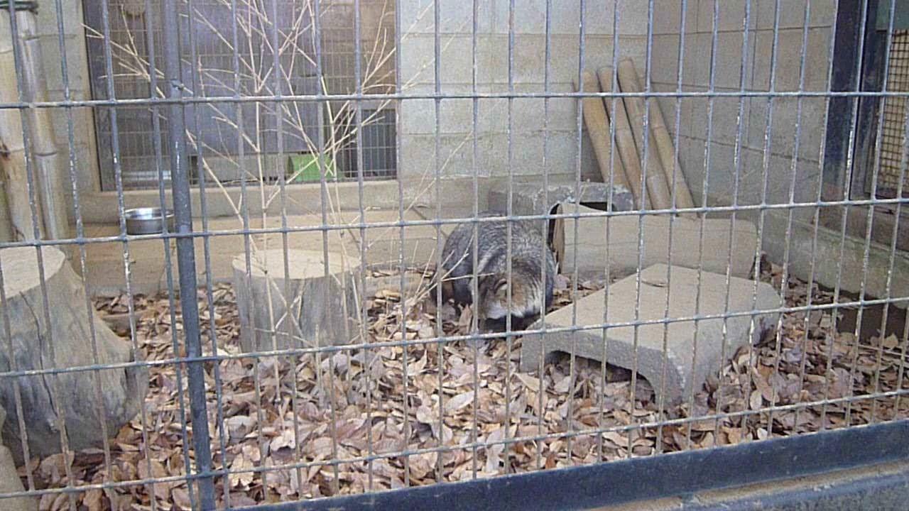 夢見 が 崎 動物園 【川崎市】年中無休の無料動物園がここにある!【夢見ヶ崎動物公園】