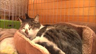 ひたすら猫さん達のお昼寝 Nap of the cats alone thumbnail