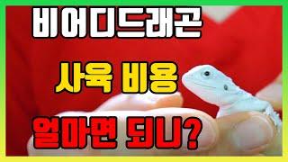 파충류 비어디드래곤 입문자 사육 초기 비용 공개! [팣…
