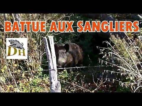 CHASSE SANGLIER : Magnifique Battue Aux Sangliers