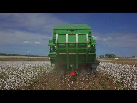 Cotton Fields Back Home