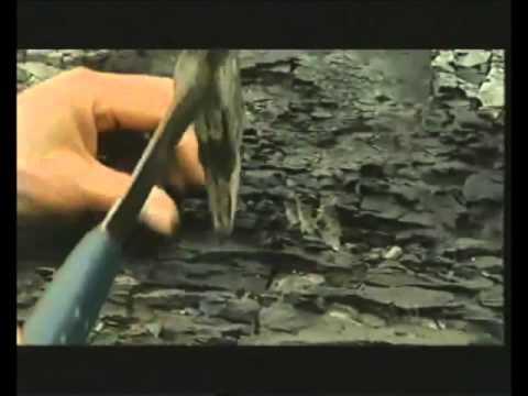 Origin of oil 14 mins