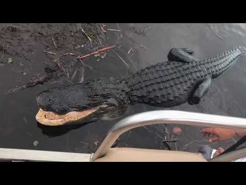 An Airboat Ride in Everglades National Park, Florida