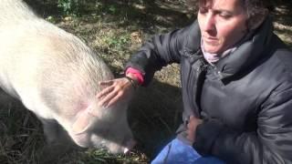 Eugénisme animal