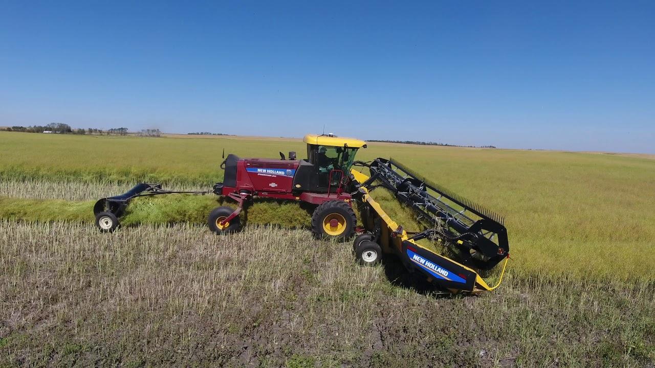 Demo of New Holland SR200 Windrower with DuraSwath 440HB Header  Wass  Farms, McLean, Saskatchewan