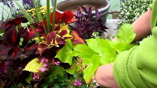 Container Gardening Demonstration:  Colourful Foliage Planter