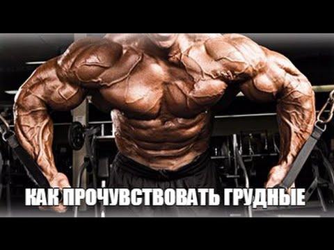 Скачать - Гусев - Составление программы тренировок (2015