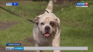 В Новокузнецке решают проблему поиска мест для выгула собак