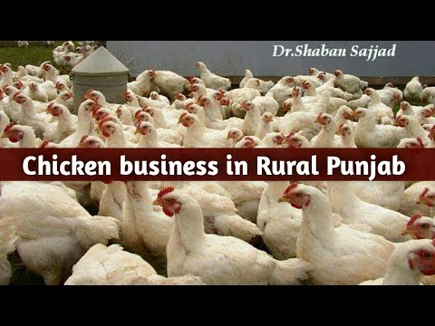 Chicken Buisness In South Punjab Pakistan