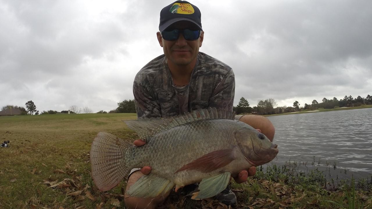 Tilapia fishing houston tx 1080p hd youtube for Fishing in houston