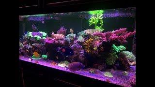 Klem's 1 year Old 225 Reef Tank