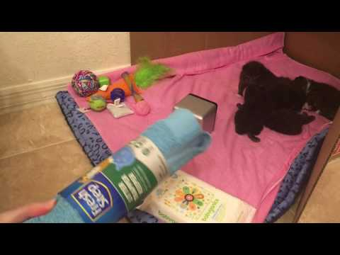 So Many Amazon Wishes Granted for Thankful Foster Cat and her Kittens!