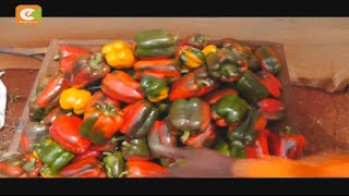 Smart Farm: Capsicum Farming