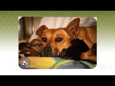 Feist Dog Videos