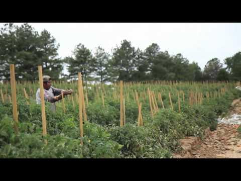 Broken Lives, Empty Fields: One Alabama Farmer's Story