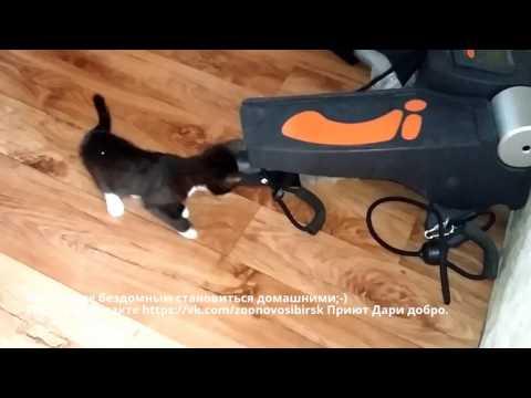 кошка знакомится с домом