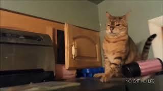Приколы с котами не забывай про лайк