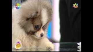 Köpek sahibi olmanın insan psikolojisine etkileri Can Paksoy anlatıyor