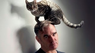 Morrissey Fighting Australia's 2M Cat Genocide