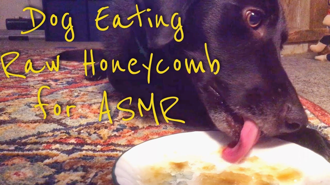 Asmr Dog Eating Raw Honeycomb Extremely Sticky Mouth Sounds No Talking