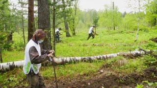 Кто и как восстанавливает лес? «Таёжный спецназ» 15.06.2020