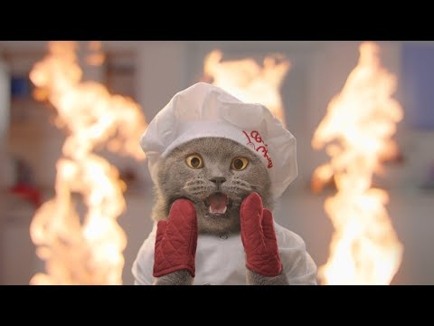 The Cat Cooking