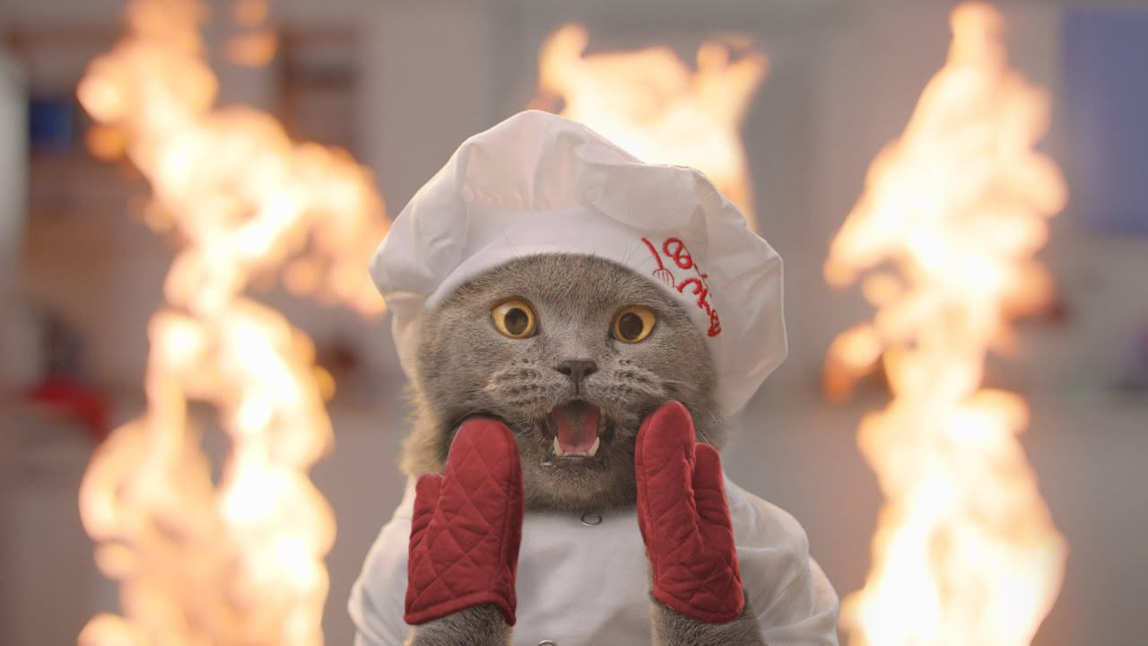 The Cat Cooking Show 2