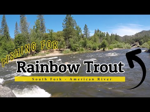 Rainbow Trout Fishing On The South Fork Of The American River
