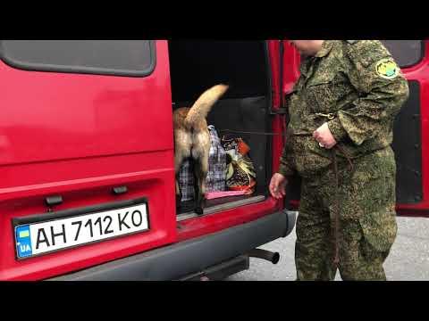 «БелПресса» провела один день намногостороннем автомобильном пропускном посту «Нехотеевка»