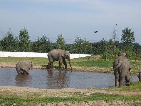 Nederland ~ Dierentuin ~ Zoo in The Netherlands