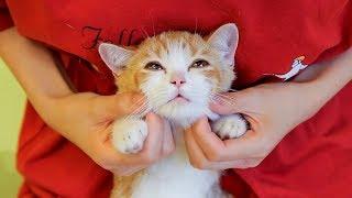 铲屎官为训练橘猫性格,竟让朋友到家轮着强吸,嘤嘤喵生艰难!