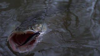 Друг поймал рыбу мечты Нет слов ТОП 1 воблер на щуку Ловля щуки на воблеры и джиг на малой реке