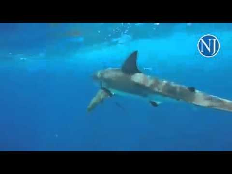 Two teenagers off Ponce Inlet shot this video of a great white shark.