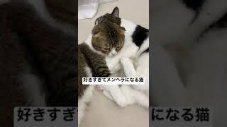 パパ猫が好きすぎてメンヘラになる猫w