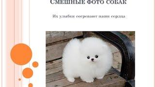Смешные фото собак - просто отпад!