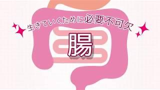 """腸の働きとビフィズス菌の重要性""""について、アニメーションを用いてわかりやすく解説します! ヤクルト本社ホームページ https://www.yakult.co.jp..."""