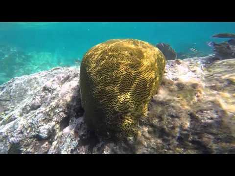 Marine Ecology: US Virgin Islands