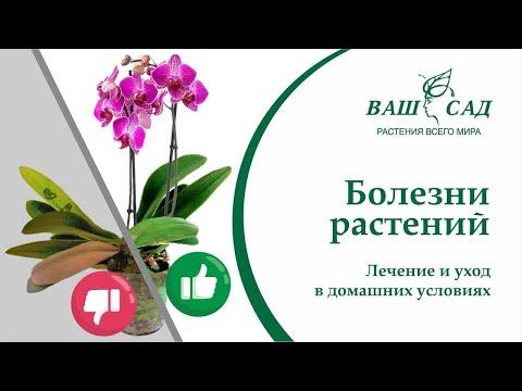 Как избежать заболеваний у Ваших растений после покупки? Советы от Ваш сад