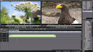 EDIUS Pro 7 and Native 4K from the Panasonic Lumix
