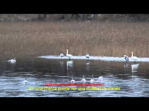 Клип Nightwish - Lappi (Lapland): I. Erämaajärvi