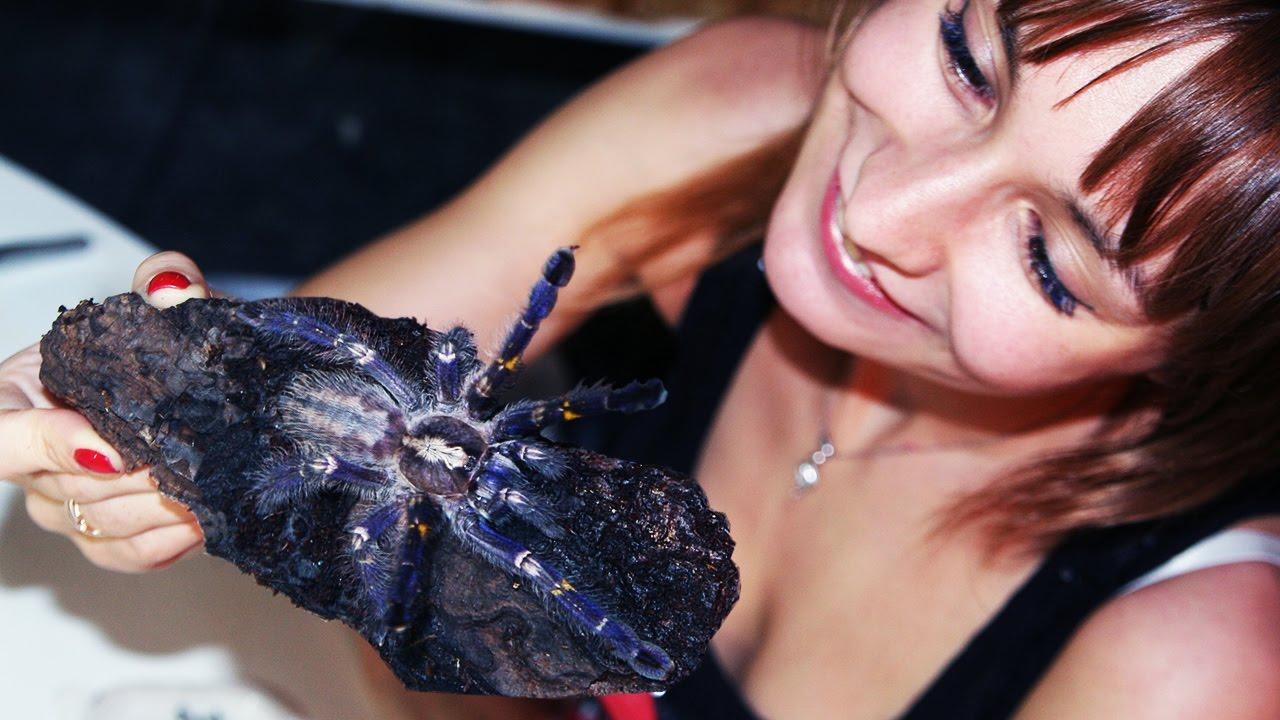 30 авг 2014. Паук-птицеед (нанду хроматус) ест мраморного таракана (1) можно купить +7 918-745-82-30 (2500 руб. ).