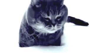 Замедленная съемка прыжок кота в снег