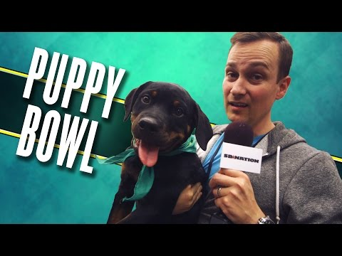 Puppy Bowl 2017: Watch these good dogs in virtual reality