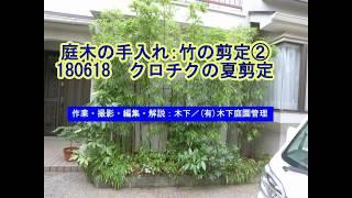 庭木の手入れ:竹②180618 クロチクの剪定(6月)