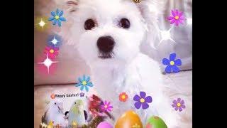 Happy Easter, Love Paimei