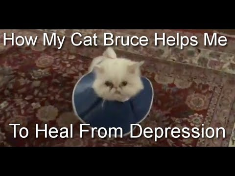 How My Cat Bruce Helps Me to Heal From Depression