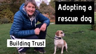 Adopting a Rescue Dog - Building Trust